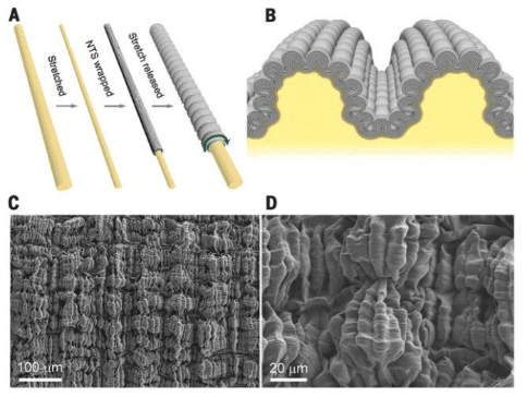 Figure 1. The formation process and SEM picture of multilayer buckling structure